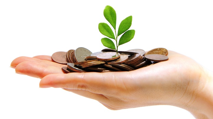 dinero y hojas