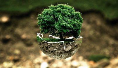 emprendimiento-verde